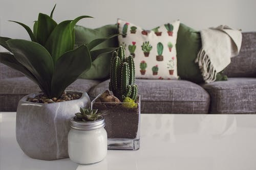 Plants for living room decoration