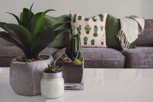 Plants for living room decoration