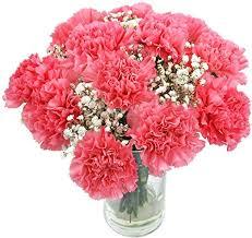 Carnations flower for mom