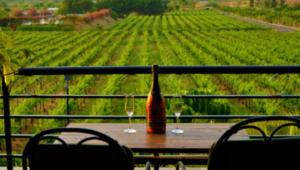 1. Vineyards