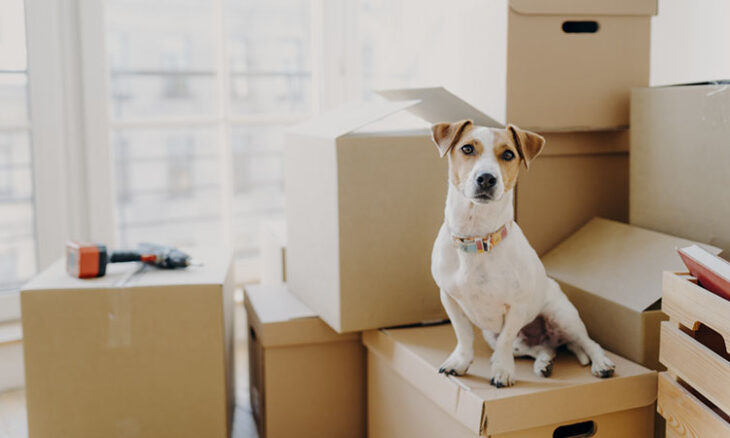 moving with pet